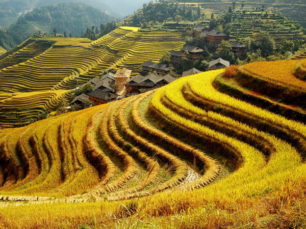 Dragon Backbone's Rice Terraces