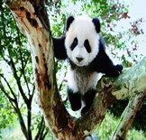 Family China Travel Tour to Panda Base - 10 Days - Beijing, Xian, Chengdu, Leshan, Beijing